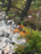 1 Hiking Trail_edited.jpg