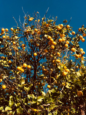 a lemon tree in corinth.