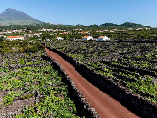 40 novos casos nos Açores: 36 em São Miguel, 3 na Terceira e 1 no Pico