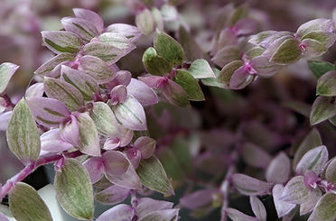 rare plants uk