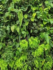 plant rare