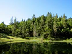 HBC Pond