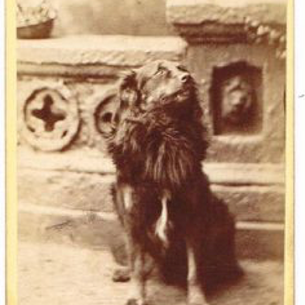 This dog photo was taken at Alexander McNab's Studio after he left for America. This is most likely a Scotch Collie.