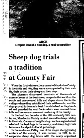 One Legged McNab Competes in Sheep Trial 1981