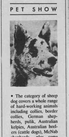 1965 LA Times Article on Sheep Dogs