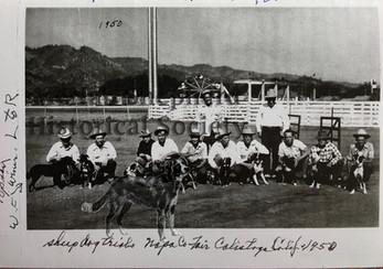 Sheep Dog Trials Napa County Fair, Calistoga 1950