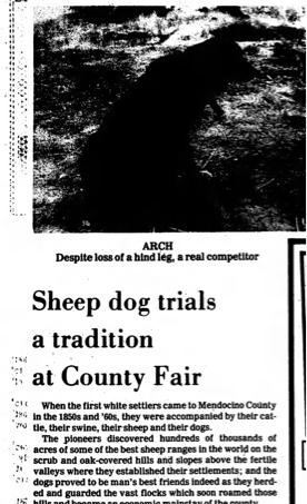 1981 Mendocino County Fair Sheep Dog Trials