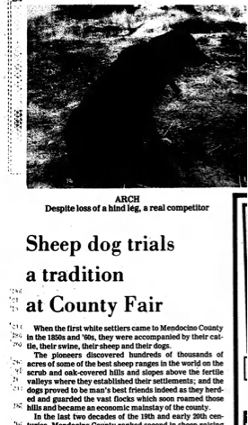 1981 Mendocino County Fair Sheep Dog Trials