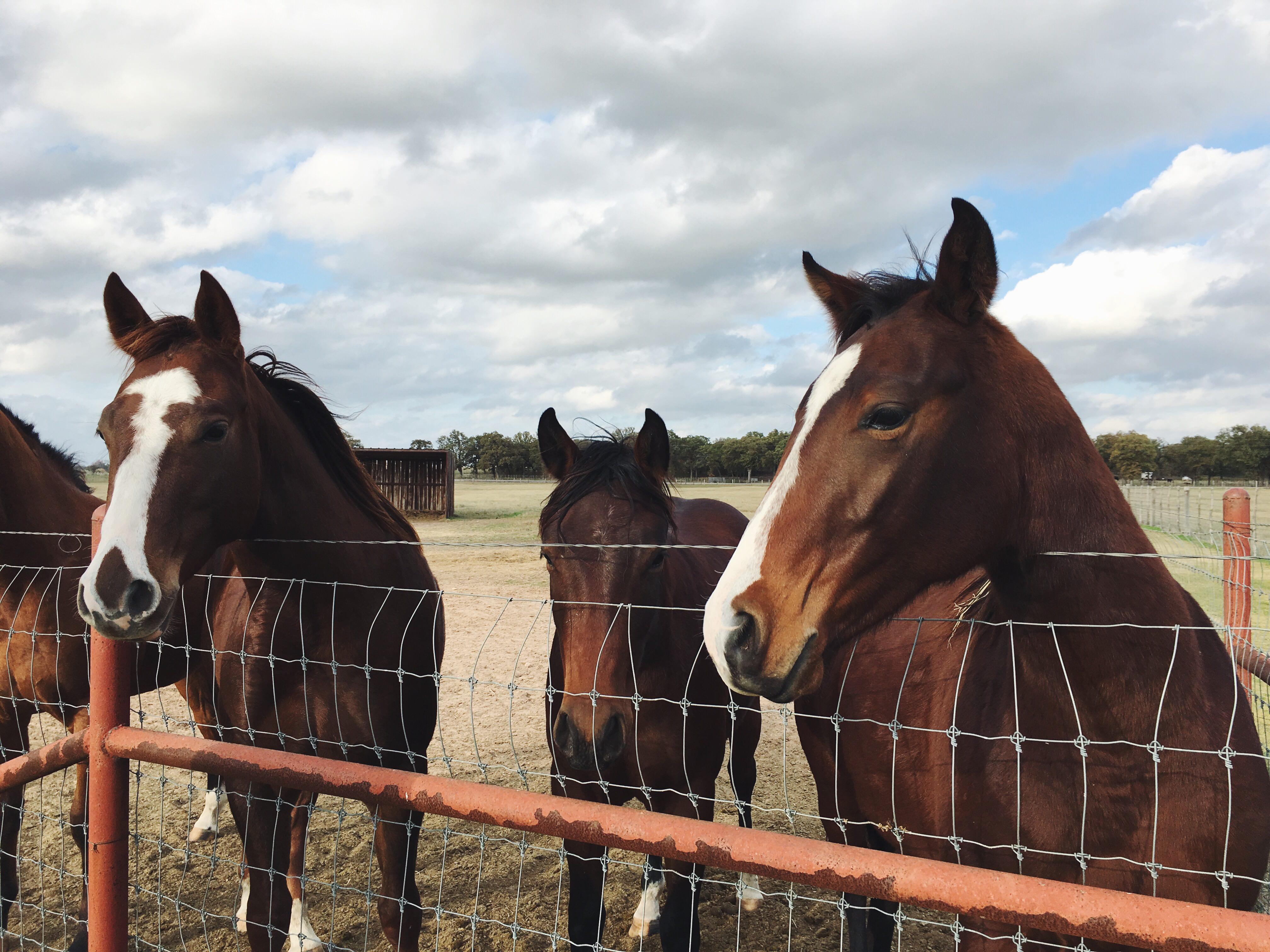 Ukiah equine veterinarian