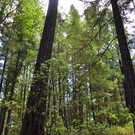 Luxury Camping Near the Mendocino National Forest