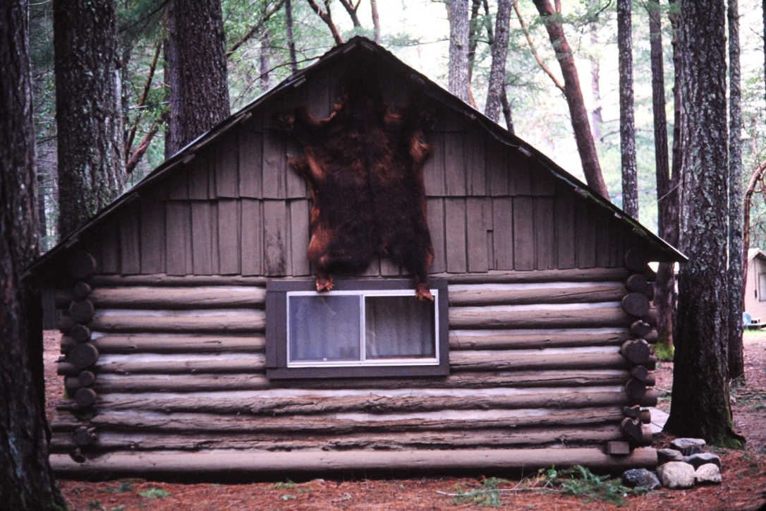 Bear Skin on Oak Cabin
