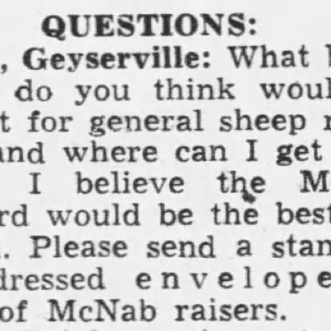 PD 1950 What Breed of Dog is Best for General Sheep Ranch Work?