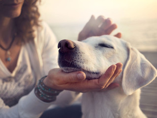 Canine Massage: Benefits and Differences from Human Massage