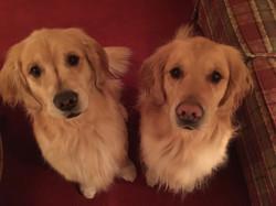 DILLON & RILEY