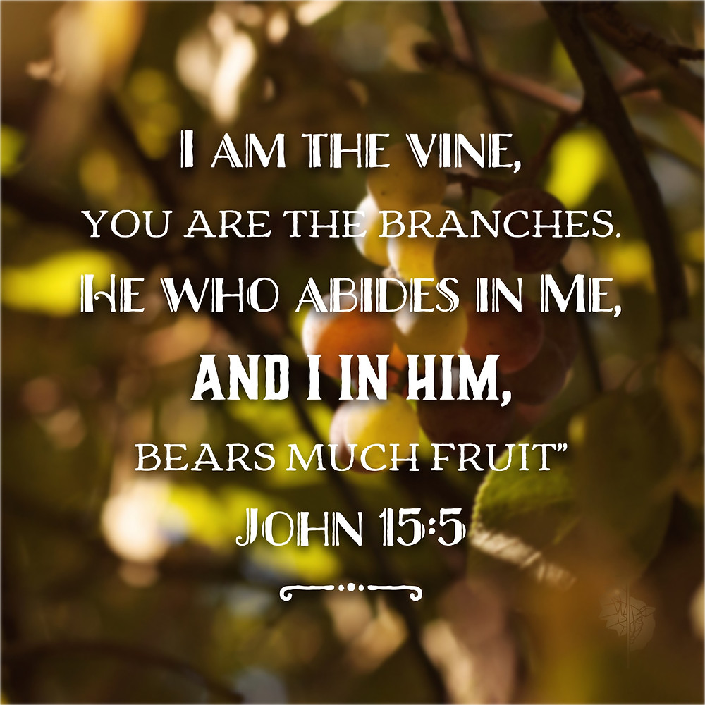 i am the true vine john 15:5