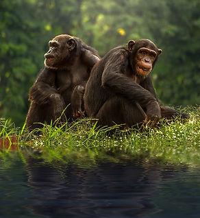 chimp-1822540_640.jpg