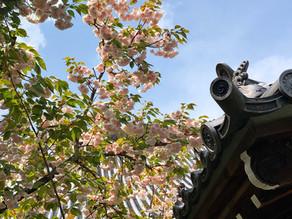 筍・桜・躑躅