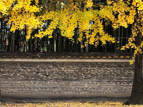 瓦土塀〜大徳寺