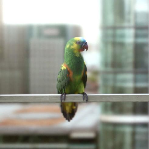 Channel 5 'Ident - Birds'