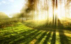 forest shadows.jpg