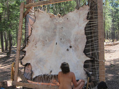 Contemplating the size of the buffalo hide! Dry pieces of skin on the ground all around from hours of scraping