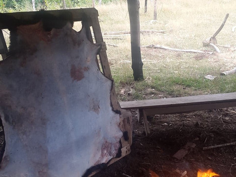 Sheep hide drying by the fire