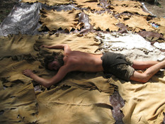 Tanning this many hides may make you feel a little tired...