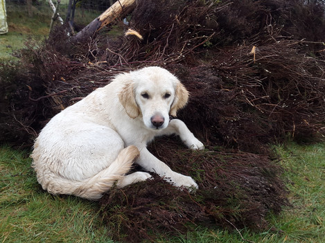 Puppy in the pile of thatch