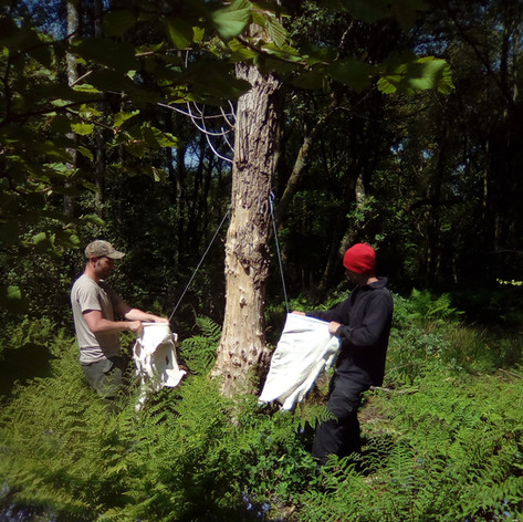 Working the hide over a cable to soften it - hide tanning is so much more enjoyable in company