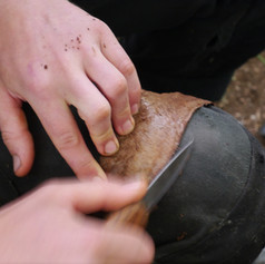 Scraping a fish skin membrane