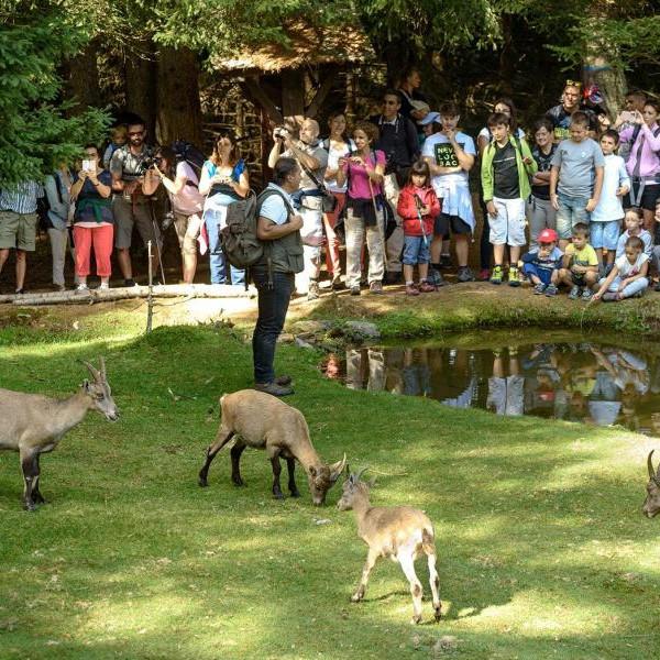 """""""Gli animali del Parco Ecofaunistico di Aprica e i loro richiami"""""""