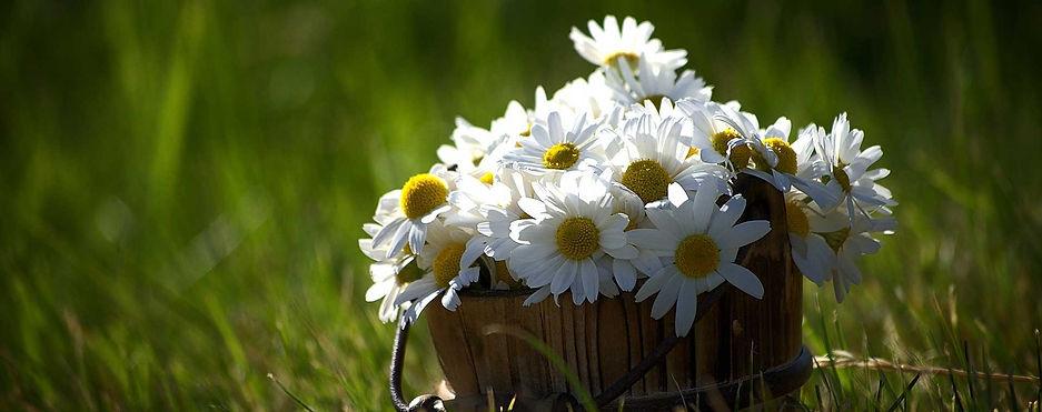 fiori_pix.jpg
