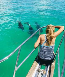 Sea Monkey's dolphin tour