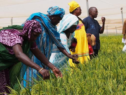The hybrid alternative for Africa