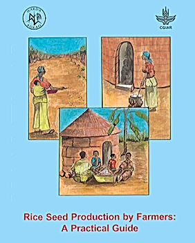 Rice Seed Production by Farmers.jpg