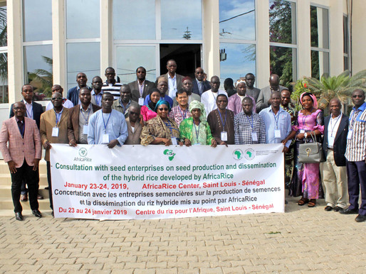 AfricaRice and partners consult with seed companies on seed production