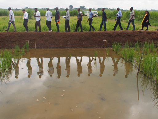AfricaRice teams up with national partners to sustainably intensify rice-based systems in Africa