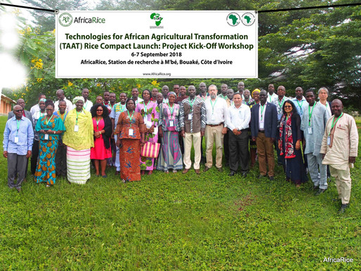 Rice Value Chain Compact of AfDB-funded TAAT initiative launched to help scale up proven rice techno