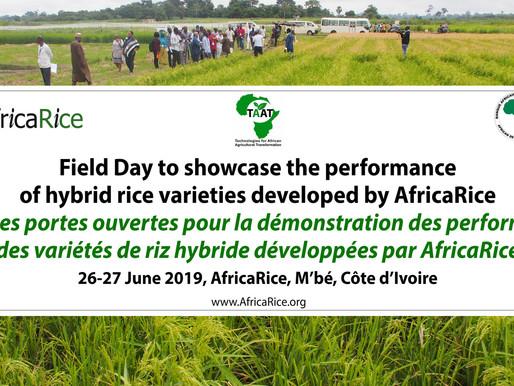 AfricaRice hybrid rice varieties spark seed companies' interest in Africa