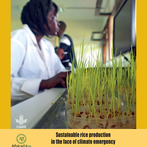 AfricaRice Annual Report 2018 highlights work on sustainable rice production in the face of climate