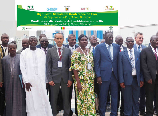 AfricaRice Council of Ministers sends strong signal  of commitment to drive Africa's rice agenda