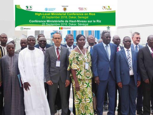 Le Conseil des ministres d'AfricaRice affirme son engagement à redynamiser le secteur rizicole en Af