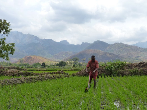 New journal article calls for responsible use of herbicides by rice farmers in Africa