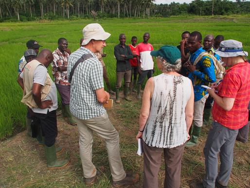 AfricaRice lance un projet de 2 millions de $ sur les bas-fonds en Côte d'Ivoire et au Ghana