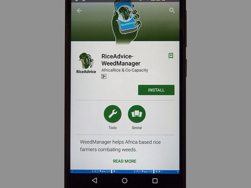 AfricaRice launches free mobile app for rice weed control in Africa