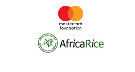 Plus de 5 000 acteurs de la filière riz au Sénégal bénéficient d'un projet axé sur les jeunes