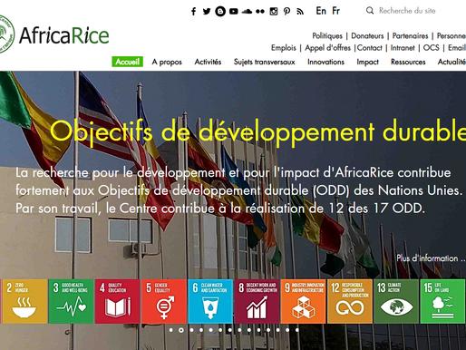 AfricaRice lance son nouveau site web bilingue