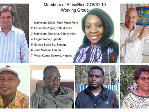 Maïmouna Diatta: Rising quietly to the challenge of leading COVID-19 working group at AfricaRice