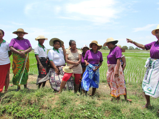 A women's group in Madagascar fights all odds to produce quality seeds