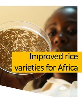 Brochures-Improved rice varieties for Af